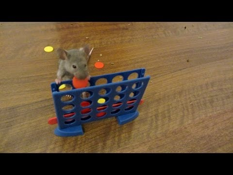 Coffee Break Video-Mouse Skateboarding and Playing Connect 4