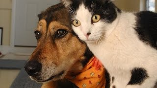 Video Funny Cats and Dogs Compilation MP3, 3GP, MP4, WEBM, AVI, FLV Juni 2018