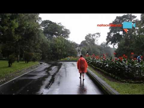 Rev cikad na Bali