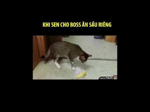 Cho mèo ăn sầu riêng và cái kết