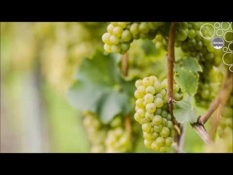 Weinland Südtirol - Sauvignon