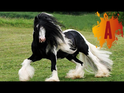 Most beautiful black horse in the world