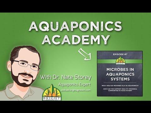 Aquaponics Academy #7: Microbes in Aquaponics