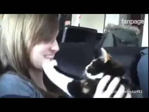 gatti e cani che odiano le coccole e i bacini