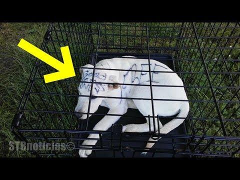 Frases tristes - Pareja encuentra un cachorro abandonado en un parque con el mensaje más triste escrito en su cuerpo.