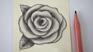 Video How to draw a rose - free art lesson MP3, 3GP, MP4, WEBM, AVI, FLV Desember 2018