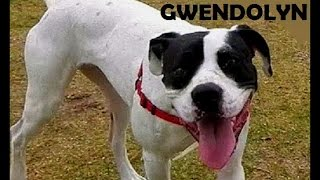 Hi there, my name is Gwendolyn. I am a smart but cheeky young lady! I am searching for my forever home. Could that be with you ...