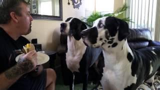 Psy próbowały ugryźć kanapkę swojemu właścicielowi. Kiedy im tego zabronił, genialnie zareagowały!