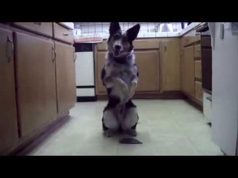 incredibile quello che riesce a fare questo cane