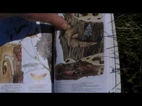 Camping & Wilderness Survival Book Review
