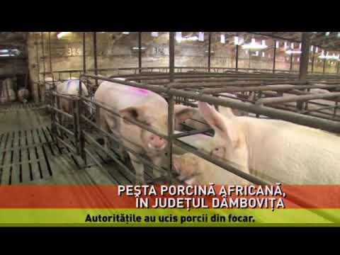 Focar de pestă porcină africană, confirmat în localitatea Lucieni din Dâmboviţa