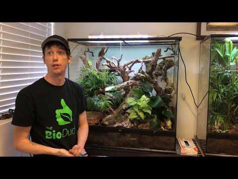 36 x 18 x 36 Exo Terra Bioactive Terrarium build for Chinese Gliding Frogs_Legjobb videók: Terrárium, Vivárium
