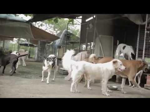 IKEA a menhelyi kutyák megmentéséért
