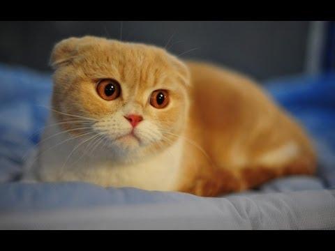 Gatos Malucos