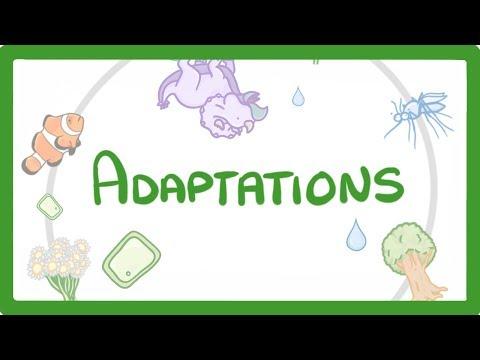 GCSE Biology - Adaptations  #60