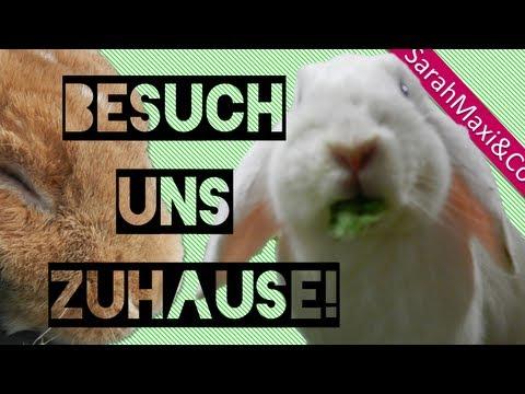 Kaninchen-Gehege (25qm) einrichten, selber machen, bauen Stall Käfig Haltung