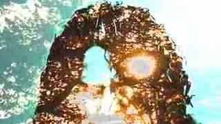 Video Obraz plný slunečnic