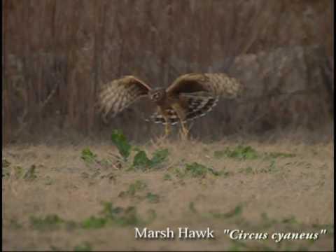 Krása ptačího pohybu