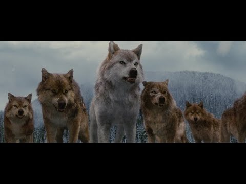 Twilight Wolves Scenes