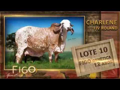 LOTE 10 - CHARLENE FIV ROLAND