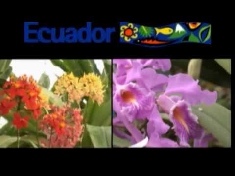 Tropische Orchideen: Ecuador - Orchideen / Orchid P ...