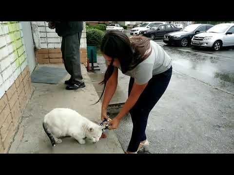 Всемирный день кошек в Чебоксарах