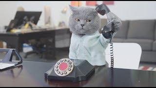 Video Pet Peeves - Office Edition MP3, 3GP, MP4, WEBM, AVI, FLV Juni 2018