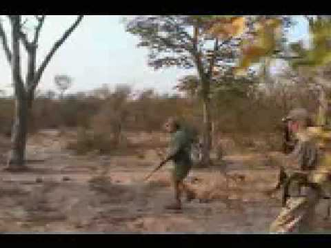Safari - A very close call! A last second do or die shot saves the hunter. Watch in slow motion as the lion makes his final lunge. NEW RULE: Posts with vulgar and ina...