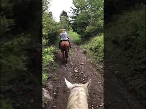 Appalachian Trail horseback ride