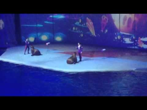 Москвариум на ВДНХ (видео)
