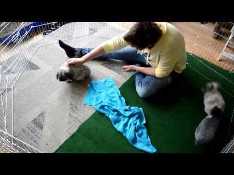Koppeling konijnen