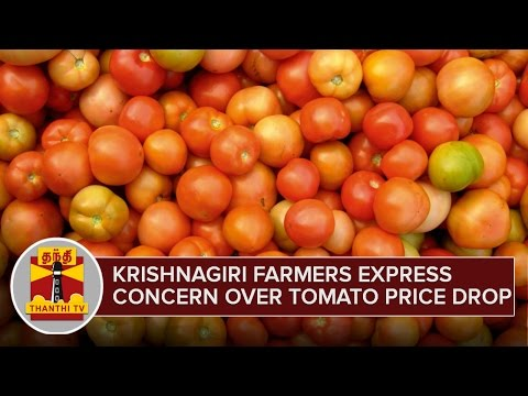 Krishnagiri-Farmers-express-Concern-over-Tomato-Price-Drop--Thanthi-TV