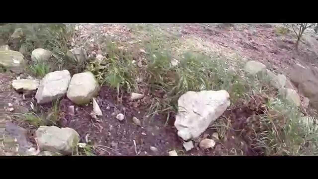 藤垈の滝・大窪いやしの杜公園の水芭蕉