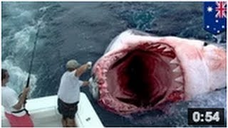 Video Un géant requin blanc a été mangé par un monstre des mers aussi connu comme le megalodon MP3, 3GP, MP4, WEBM, AVI, FLV Juni 2017