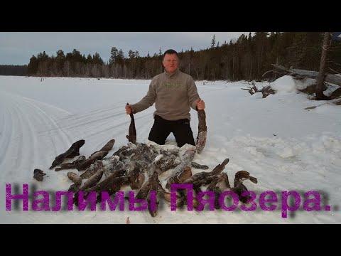 пяозеро рыбалка май