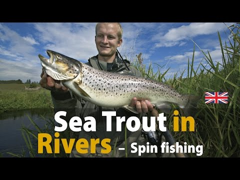 Sea Trout in Rivers - Spin fishing