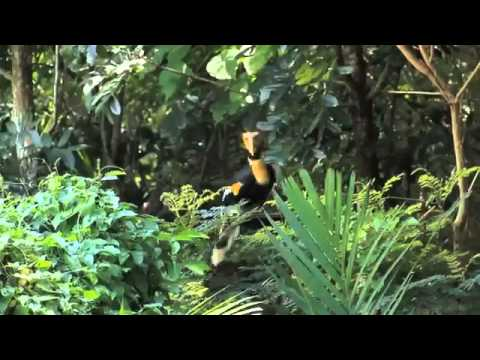 Katy Perry   Roar  Queen of the Jungle Music Video Preview)