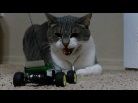 Cat VS. Losi MICRO T RC Car