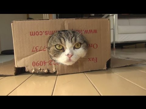 The Best Of Maru 2011