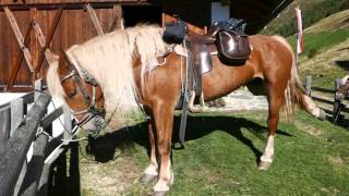 Trekking a cavallo Alto Adige