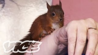 Red Squirrel Orphans - The Cute Show - VICE