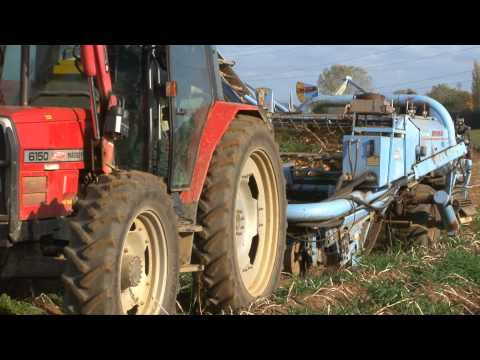 Video Harvesting Potatoes - from ' bee bright - OUT AND ABOUT ON THE FARM - INCREDIBLE CROPS!' download in MP3, 3GP, MP4, WEBM, AVI, FLV January 2017