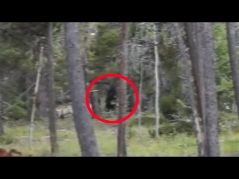 Bigfoot Sighting in Coal Creek Canyon, Colorado 2015