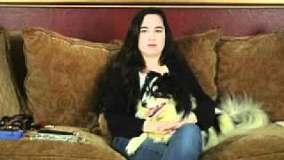 Dog Training - When To Start Training Your Dog