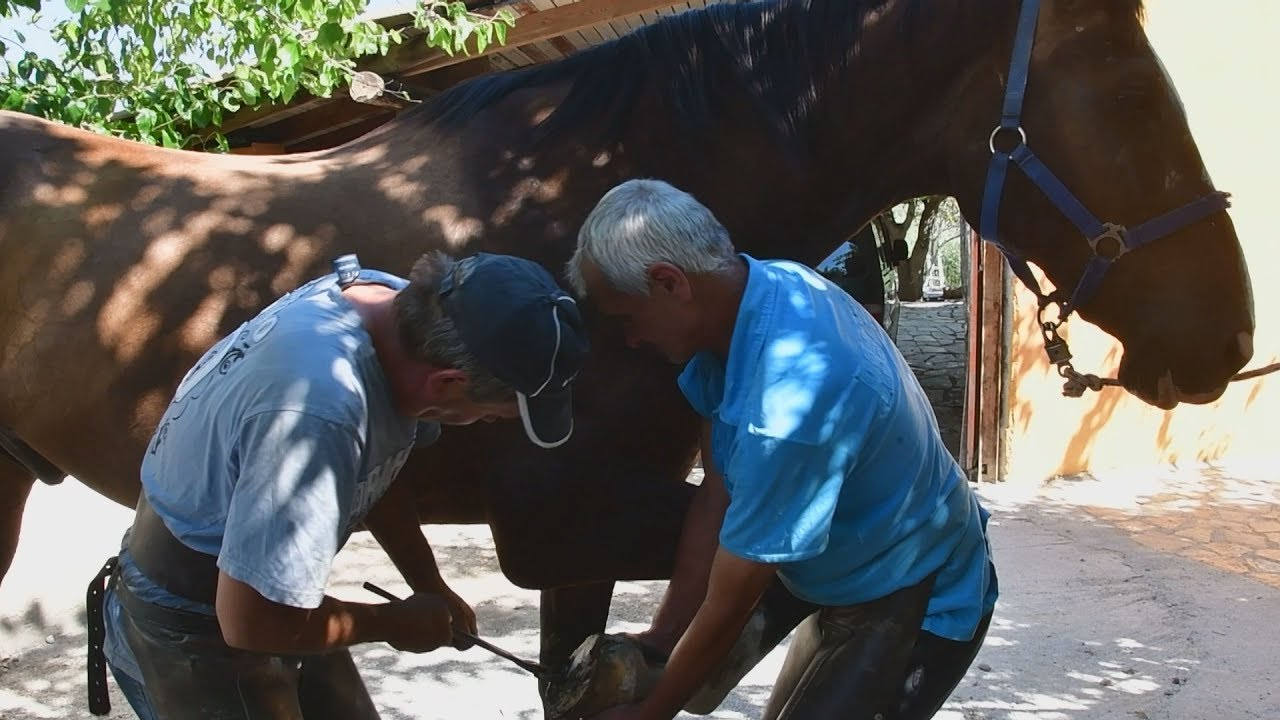 Αργολίδα: Παραδοσιακό πετάλωμα αλόγου