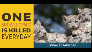 Text YES to 66866 to help stop the killing and save snow leopards. This video will be shown on a giant screen at 1500 Broadway in New York City's Times Square 3 times per hour between December 2016 and March 2017 to raise awareness for the endangered snow leopard. If you're in the area, go check it out, and tweet your selfie from Times Square with the hashtag #SaveSnowLeopards