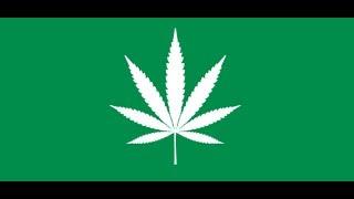 Seminar: Cannabis og legalisering