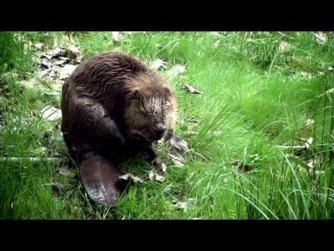Das Biosphärenreservat Mittelelbe - ein naturnahes  ...