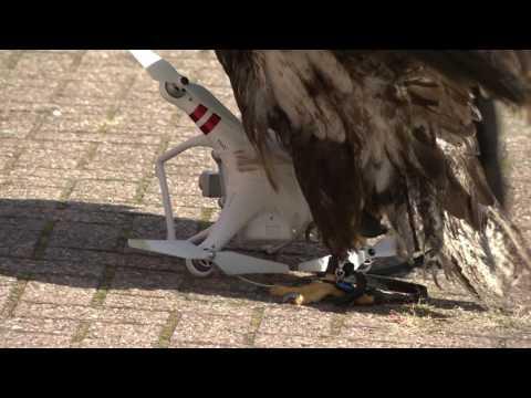 Tak wygląda szkolenie Orła do walki z dronami! To jest dopiero pomysł!