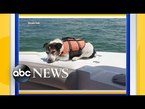 Dog Rescued from the Ocean After Falling Overboard
